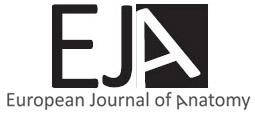 European journal of anatomy